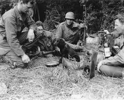 Men from HQ Co relax June 12, 1944 with Cpl Lou Lisko feeding puppy named Ranger